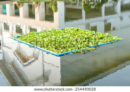 the effect of water hyacinth proliferation Water hyacinth was introduced to africa over a century ago, but it did not  the  die-off of native plants affects fish and other aquatic animals  return of water  hyacinth proliferation within lake victoria may therefore be just a.