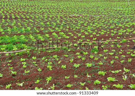 Converting agricultural land to grow vegetables in Thailand. - stock photo