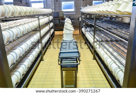 Conveyor belt in a cheese factory with a plastic cheese molds