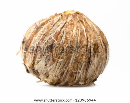 cooked chestnut isolated on white background - stock photo