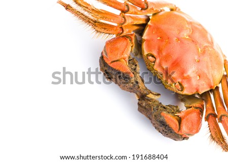 cooked crab on a white background with copy space - stock photo