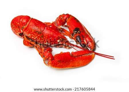 Cooked European common lobster isolated on a white studio background. - stock photo