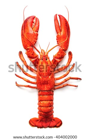 Cooked lobster isolated on a white background