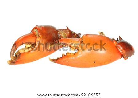 Cooked Pincers Of A Crab On White Background