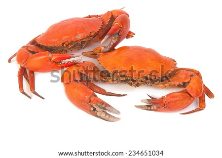 Cooked whole dungeness crab - stock photo