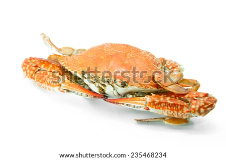 Cooked whole dungeness crab with natural marks on the shell and isolated on white background - stock photo