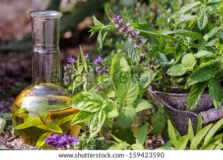 Cooking and homeopathy with medical plants - stock photo