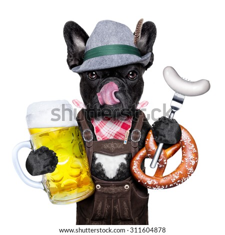 cool bavarian german french bulldog  dog  with beer mug and sausage and pretzel bread , isolated on white background - stock photo