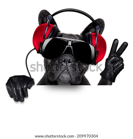 cool dj dog listening to music behind a white and blank banner or placard with peace  or victory fingers - stock photo