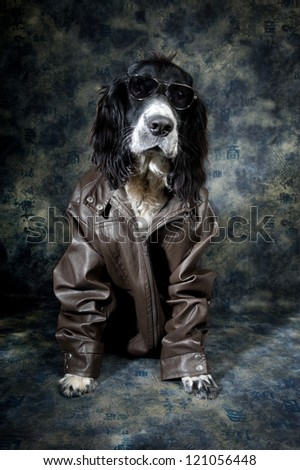 Cool dog with an attitude - stock photo