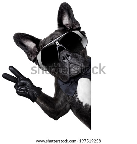 cool dog with peace or victory fingers beside a white blank banner or placard - stock photo