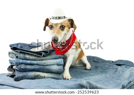 Cool fashionable denim dog in the set of jeans things