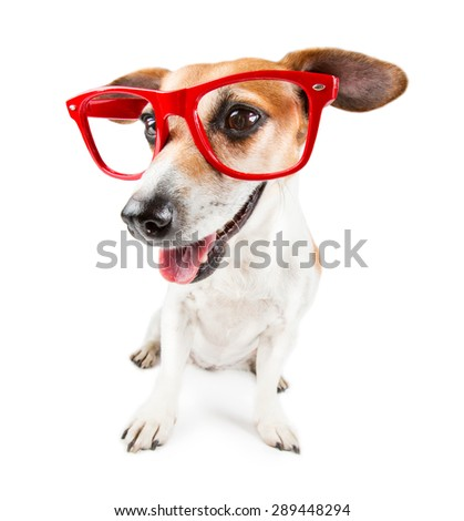Cool smiling dog with red sunglasses - stock photo