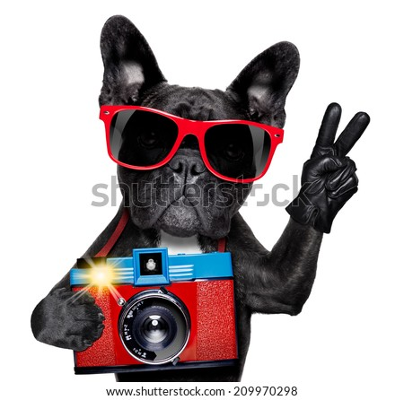 cool tourist photographer dog taking a snapshot or picture with a retro old camera - stock photo
