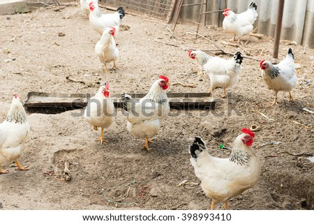 Coop with chickens in the village. Poultry yard - stock photo