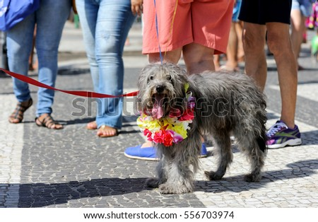 Copacabana, Rio de Janeiro, Brazil - January 31, 2016: Dog owners meet up to celebrate the Carnival with their animal.