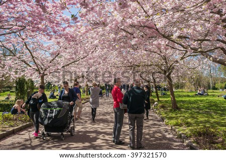 COPENHAGEN, DENMARK - MARCH 14, 2016: People enjoying the first signs of spring in a park with Chinese cherry trees blossoming.