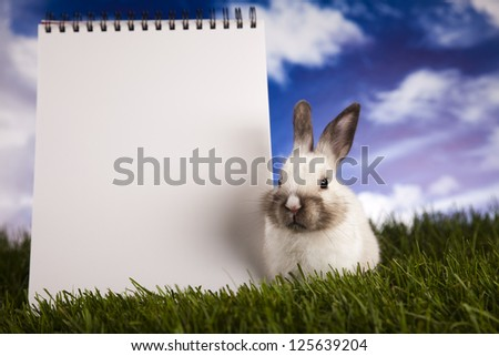 Copyspace blank paper and bunny - stock photo