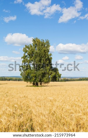 Copyspace Farmland - stock photo