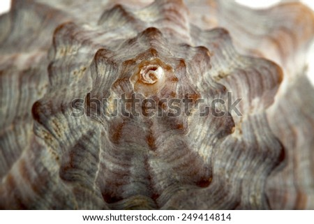 Coquillage - stock photo
