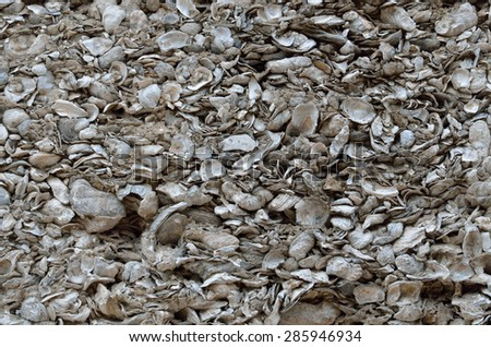 Coquina shell wall background at historic St. Augustine, Florida. - stock photo