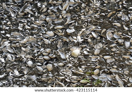 Coquina shell wall background at historic St. Augustine, Florida - stock photo
