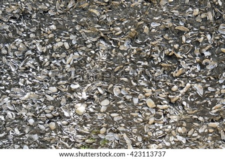 Coquina Shells wall background at historic St. Augustine, Florida