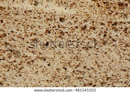 Coquina wall background