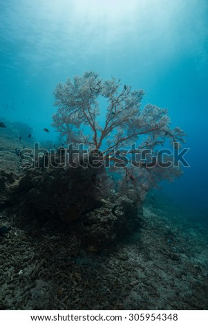 Coral - stock photo