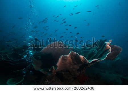 Coral and Bubbles on top of second world war wreck in Coron - stock photo