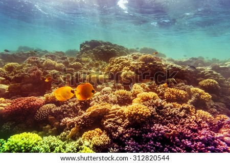 Coral and fish in the Red Sea, Egypt - stock photo