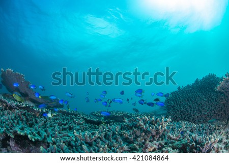 Coral and Sunshine - stock photo