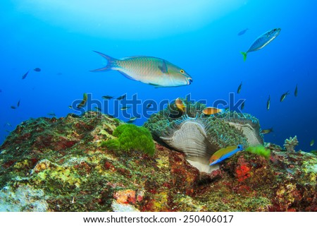 Coral anemone and fish in sea