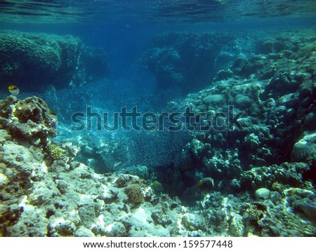 Coral channel and plenty of small fish