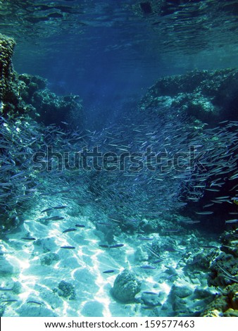 Coral channel and small fish