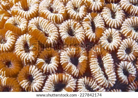 coral close up - stock photo