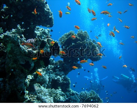 Coral colony and coral fish. Red sea. Egypt