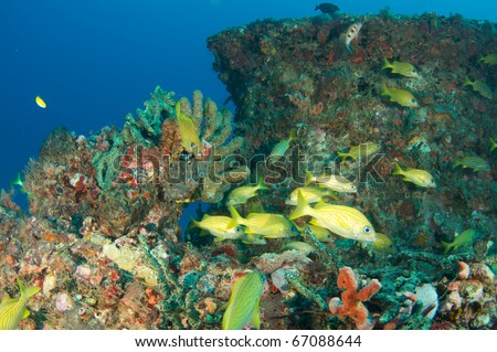 Coral encrusted artificial reef composition with fish in the foreground, picture taken in Deerfield Beach, Florida. - stock photo