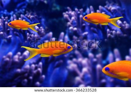 coral fish - stock photo