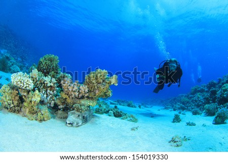 Coral, fish and scuba divers underwater