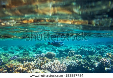 Coral fish in  Red Sea,Egypt - stock photo