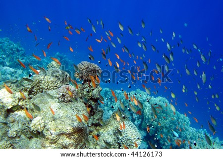 Coral fish of Red sea. Egypt