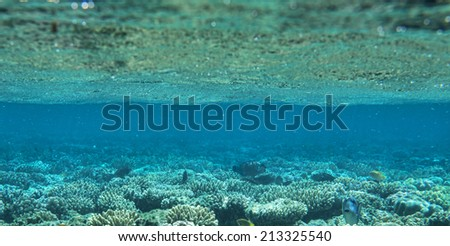 coral garden full of colorful fishes - stock photo