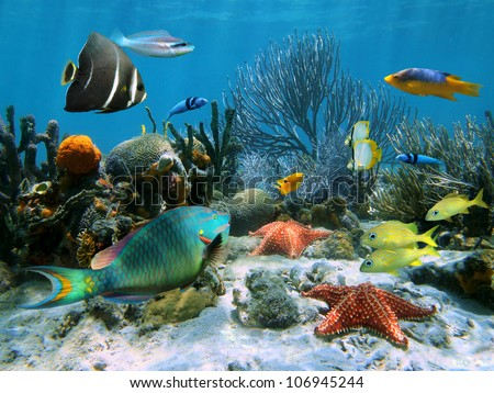 Coral garden with starfish and colorful tropical fish, Caribbean sea - stock photo