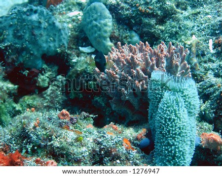 Coral home with defensive fish