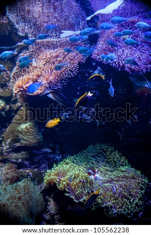 Coral in Aquarium - stock photo