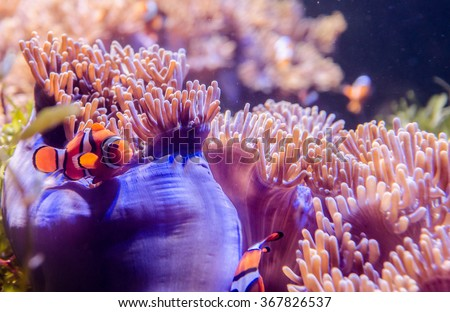 coral in deep blue sea with fish