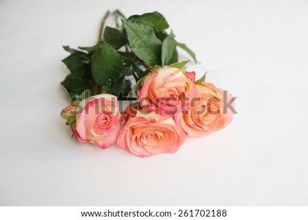Coral long stem roses on white - stock photo