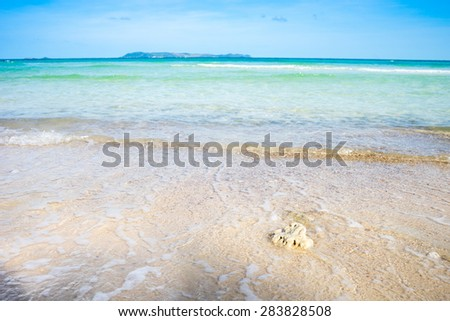 Coral on the beach - stock photo