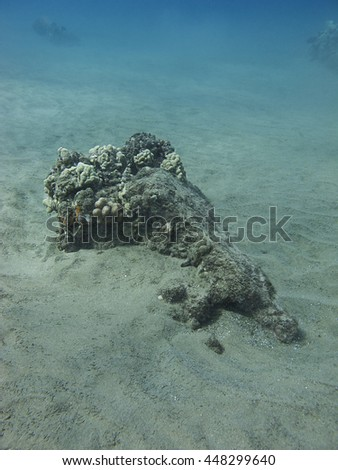 Coral outcrop at the bottom on Pacific ocean on the hawaii shore - stock photo